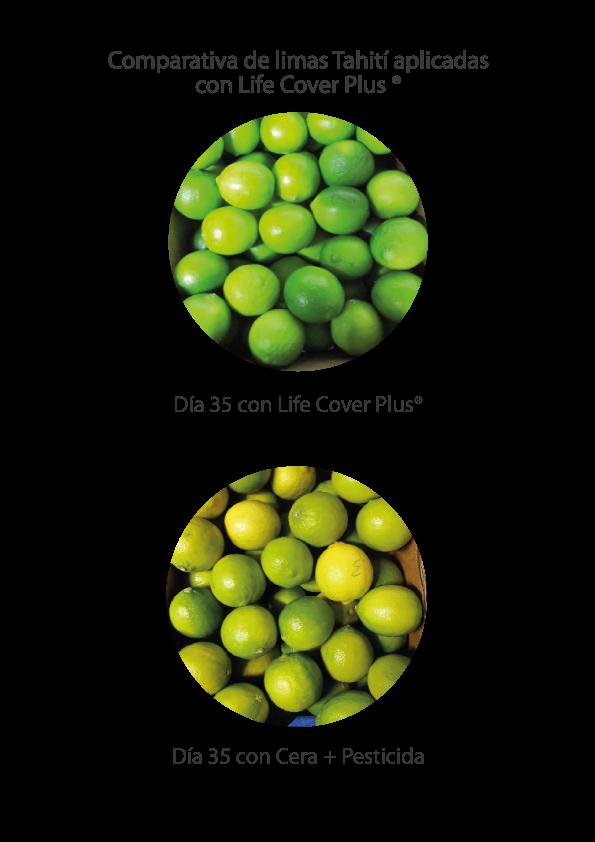 Whitepaper-LC-limon-ENG-ESP