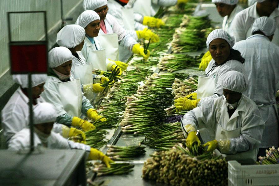 bd172-agroindustria